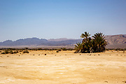 Palm tree at Timna park Landscape, Arava, Israel