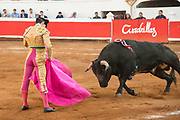 Mexican Bullfighter Arturo Macías performs with his bull during a bullfight at the Plaza de Toros March 4, 2018 in San Miguel de Allende, Mexico.