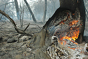 Israel, Haifa Carmel Mountain Forest, A fire smouldering in a tree trunk