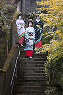 Three trainee geisha, known as 'maiko' until they make their debut appearance, and who have been hired and are being trained by the local authorities, take a walk along Perry Road in Shimoda, Japan, on Wednesday 14th December 2011. .The three geisha are Awagiku (in white/silver kimono), Rinka (black kimono), Iroha (pink kimono). Their teachers are Nami (green kimono), Hanamaru (geisha in purple kimono) and their teacher of shamisen musical instrument is Chikako (wearing pink kimono, gold glasses)..The three trainee geisha were selected after applying for the positions which were advertised by Shimoda city council via the 'Hello Work' employment office. The Shimoda city council hope to keep the geisha tradition alive within their town by the appointment of the girls, and the girls will undertake geisha duties at local festivals and for tour groups and tourists.
