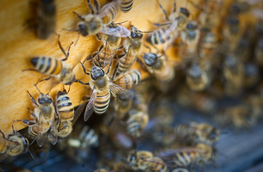 Bee Keeping Brooklyn Grange Queens