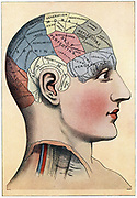 Phrenology chart, showing presumed areas of activity of the brain. Illustration c1920