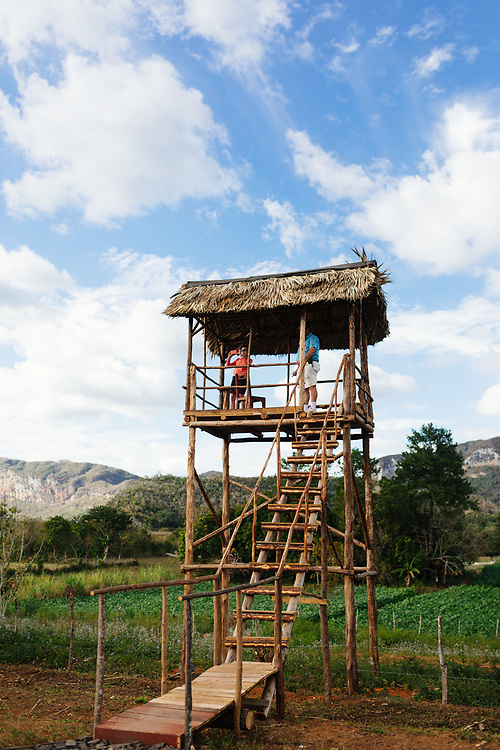 Family run cigar farm in Vinales, Cuba