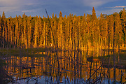 Shilliday Lake at sunset. Boreal forest.<br />Duck Mountain Provincial Park<br />Manitoba<br />Canada