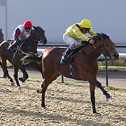 Lingfield 5th December 2012