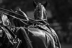 Chardon IJsbrand, NED, Baldun, Balero, Eddy, Enrico, Hugo van Hapert<br /> Donaueschingen - CHI mit Europameisterschaft Gespannfahren 2019<br /> Dressage Four-in-hand horses Driving European Championship<br /> Vierspänner Dressur<br /> 16. August 2019<br /> © www.sportfotos-lafrentz.de/Dirk Caremans