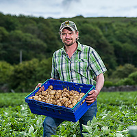 Branston Potatoes - Boydston Farm