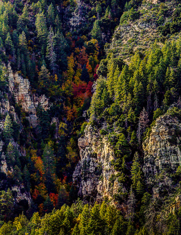 Fall Colors Popping Out Of A Canyon In Oak Creek Canyon, Near Sedona, Arizona