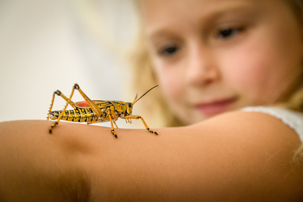"""Until today, I never much liked insects.""  -Seven year old Saylor studies an Eastern Lobber Grasshopper with entomologist, Stephanie ""Dr. Beetle Lady"" at Camp Calistoga."