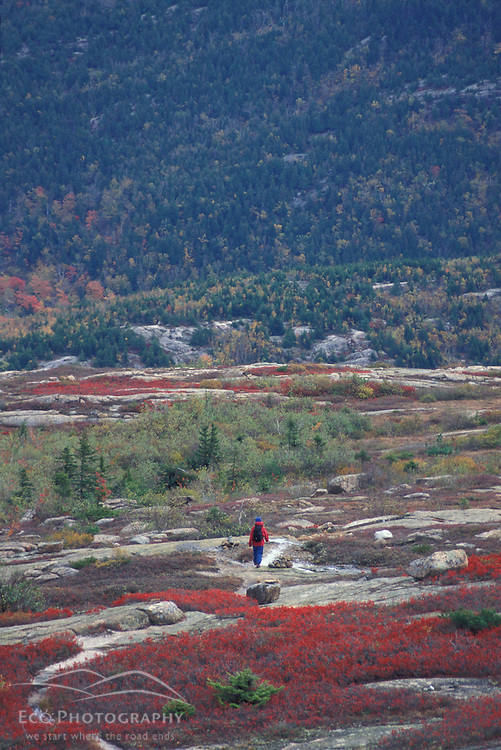 Acadia N.P., ME. Hiking on Sargent Mountain. Fall foliage.