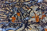 Colorful lichen encrusted rock in Glacier National Park, Montana, USA