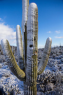 SaguaroNationalPark snow