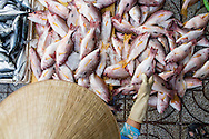 buying fish at the duong dong market