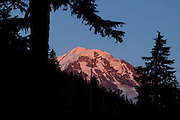 Mount Rainier, lit by the setting sun, is framed by old-growth trees along the Wonderland Trail in Mount Rainier National Park, Washington.