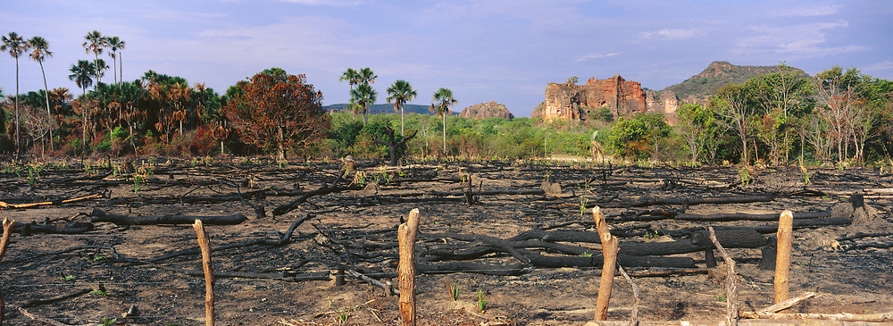 Cleared for Cattle<br />