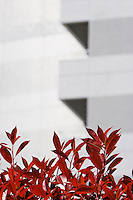 Red Leaves by Modern Skyscraper