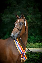 074, Hufonia<br /> Nationale merriekeuring, Finale 3 jarige springhengsten<br /> KWPN Paardendagen Ermelo 2015<br /> © Hippo Foto - Dirk Caremans