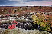 Autumn in Þingvellir National Park, south-west Iceland
