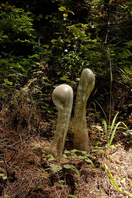 Pieces of art from Yorgen Kvinsland, Mendocino, july 2008
