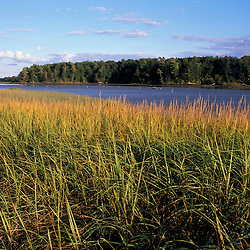 Yarmouth, ME.  Late afternoon on a salt marsh bordering the Royal River.  TPL project.