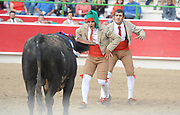 BEA AHBECK/NEWS-SENTINEL<br /> Amadores Luso Americanos de Turlock's Ulysses Gutierrez grabs his second bull of the year during the bloodless bullfight during the Our Lady of Fatima Portuguese Festival in Thornton Saturday, Oct. 15, 2016.