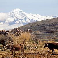 South America, Bolivia, Pariti. Scenic moment on Pariti Island, Lake Titicaca.