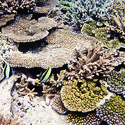 Underwater shot of coral reef at Lady Elliot Island on Queensland's coral reef.