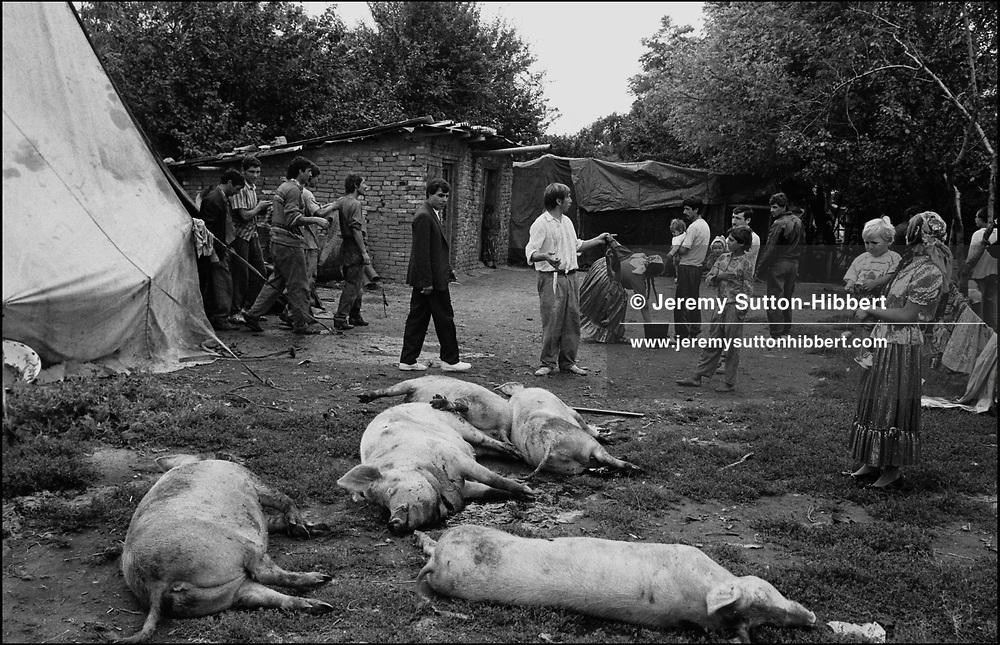 SLAUGHTERING PIGS FOR A WEDDING FEAST, SINTESTI, ROMANIA,  1994..©JEREMY SUTTON-HIBBERT 2000..TEL./FAX. +44-141-649-2912..TEL. +44-7831-138817.