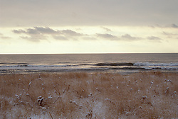 snow covered beach grass and ocean in East Hampton,NY
