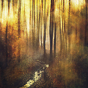 Abstract forest scene with creek - photomanipulation