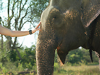Young woman stroking elephants head close-up