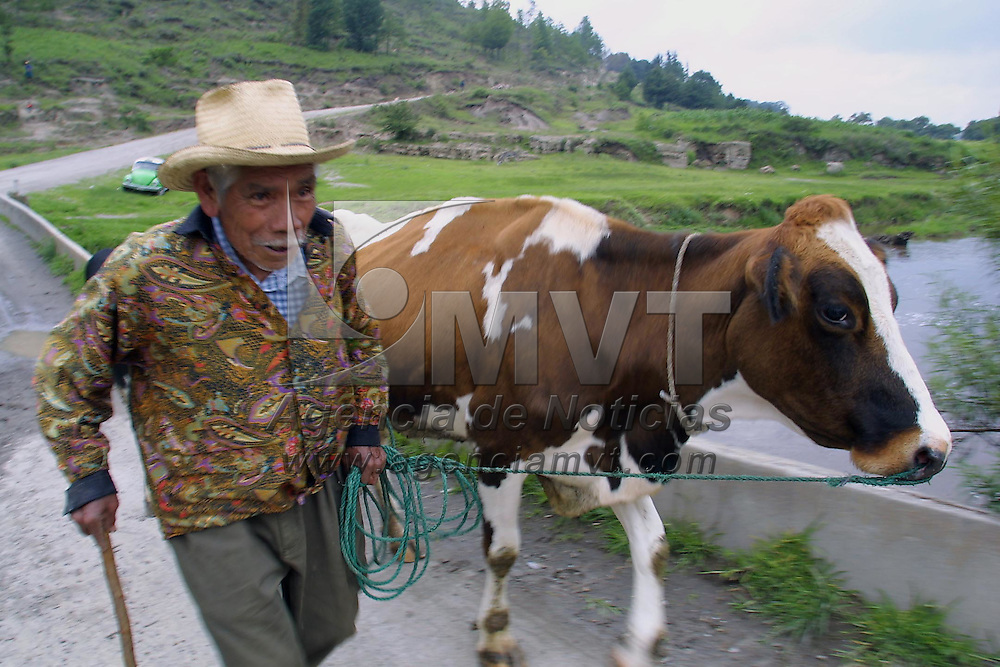 Ixtlahuaca, M&eacute;x.- Un anciano de la comunidad de Toxico cuida y pastorea sus vacas como unica forma de sustento. Agencia MVT / Mario V&aacute;zquez de la Torre. (DIGITAL)<br /> <br /> NO ARCHIVAR - NO ARCHIVE