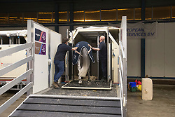 Marcus Ehning's, (GER), Singular LS La Silla <br /> Departure of the horses to the World Cup Finals in Las Vegas from Schiphol - Amsterdam 2015.<br />  © Hippo Foto - Dirk Caremans