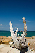 Dried trunk and branches of dead tree in the beach at Pacheca island. Las Perlas archipelago, Panama province, Panama, Central America.