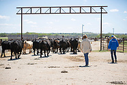 Livestock Handling for Law Enforcement and Animal Responders