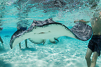 Tourists interact with Southern Stingrays at World Famous site, &quot;Stingray City Sandbar&quot;<br /> <br /> <br /> Shot in Cayman Islands