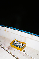 """PISCIOTTA, ITALY - 21 APRIL 2018: Fished alici di Menaica (Menaica anchovies) are seen here on the fishing boat of fishermen Vittorio Rimbaldo(56) in Pisciotta, Italy, on April 21st 2018.<br /> <br /> Former restaurant owners Donatella Marino and her husband Vittorio Rimbaldo have spent the recent years preparing and selling salted anchovies, called alici di menaica, to a growing market thanks to a boost in visibility from the non-profit Slow Food.  The ancient Menaica technique is named after the nets they use brought by the Greeks wherever they settled in the Mediterranean. Their process epitomizes the concept of slow food, and involves a nightly excursion with the special, loose nets that are built to catch only the larger swimmers. The fresh, red anchovies are immediately cleaned and brined seaside, then placed in terracotta pots in between layers of salt, to rest for three months before they're aged to perfection.While modern law requires them to use PVC containers for preserving, the government recently granted them permission to use up to 10 chestnut wood barrels for salting in the traditional manner. The barrels are """"washed"""" in the sea for 2-3 days before they're packed with anchovies and sea salt and set aside to cure for 90 days. The alici are then sold in round terracotta containers, evoking the traditional vessels that families once used to preserve their personal supply.<br /> <br /> Unlike conventional nets with holes of about one centimeter, the menaica, with holes of about one and half centimeters, lets smaller anchovies easily swim through. The point may be to concentrate on bigger specimens, but the net also prevents overfishing."""
