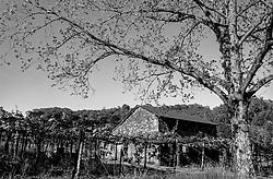Brazsile - Bento Gonçalves è un comune del Brasile nello Stato del Rio Grande do Sul. Vigneti.