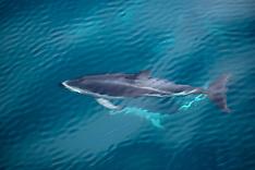 Cetaceans exc. Sperm Whales