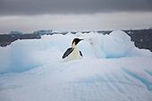 Antarctica_2014