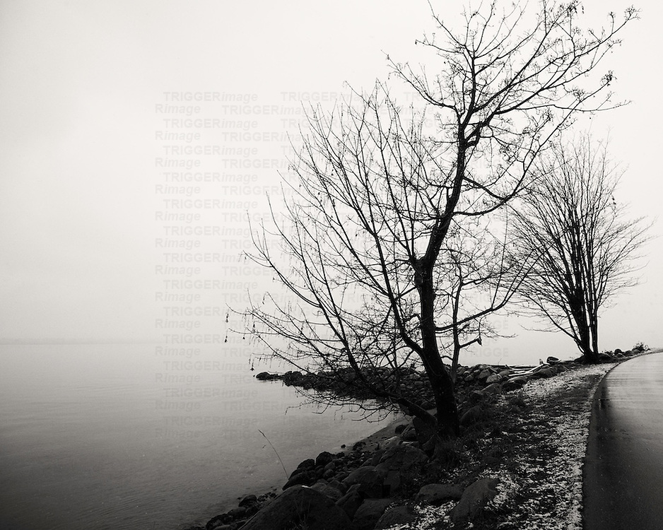 Trees against the shoreline with snow, fog and the ocean.