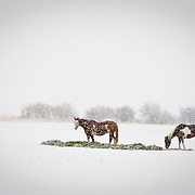 < mixed >Horses in the snow
