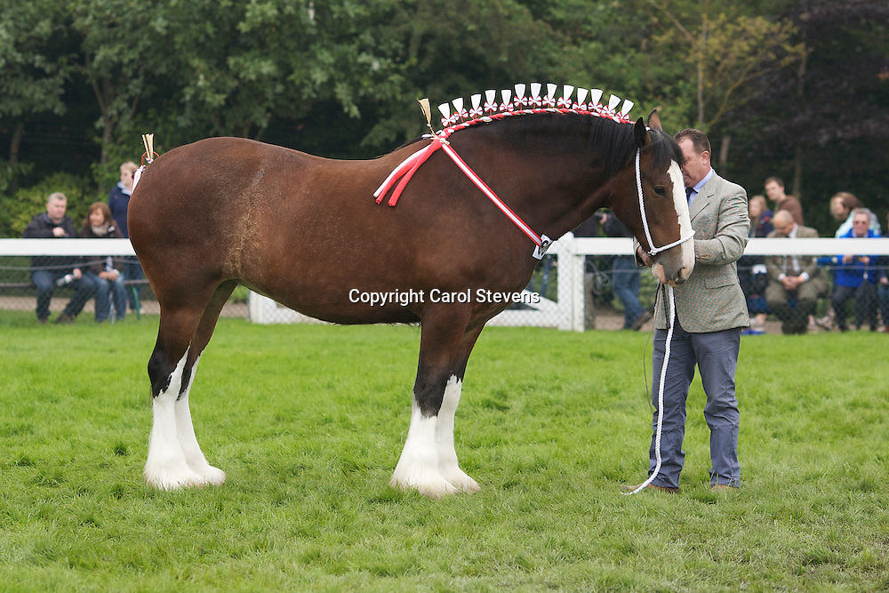 Mr L M Fountain's Bay Mare  f 2009  Woodhouse Bonny Jean<br /> Sire  Moorfield Manor Mac<br /> Dam  Cotebrook Loch Maree by Moorfield Charles<br /> Bred by owner