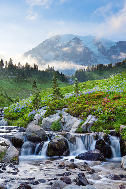 This is one of the most beautiful landscapes I've ever seen. Everywhere you look there were great shots especially myrtle creek with the wildflowers. The clouds that were out covering the Mt Rainier then finally lifted as I shot away. I definitely will be return to Mt Rainier next year.
