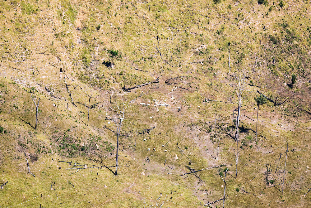 Fazenda owned by Samuel Felix Da Rocha..Daniel Beltra/Greenpeace