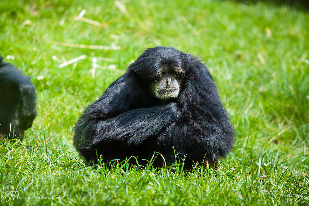 Primate - Point Defiance Zoo - Tacoma, AZ
