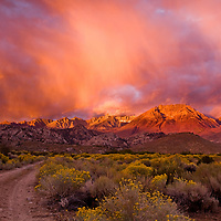 This was my Sunday morning! Woke up to a overcast morning not knowing what to expect. Then like magic the morning light pierced the sky illuminating Mt Tom and Basin Mountain of the Eastern Sierras. The alpenglow was incredible with the storm clouds.