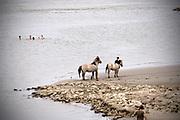 Nederland, Nijmegen, 29-7-2018 Warme zomerse dag op het Waalstrand van Nijmegen in de Ooijpolder, makkelijk te bereiken via de voetgangersbrug Ooijblik die hier ligt. Het zwemmen in de rivier de waal, rijn, is gevaarlijk vanwege de veraderlijke stroming en de drukke scheepvaart. Wilde paarden, koniks, lopen langs het water . De paarden zijn nieuwsgierig naar her eten en voedsel wat de mensen bij zich hebben. Foto: Flip Franssen