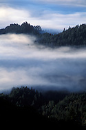 Coastal fog in morning and trees on the forest hillsides and ridges of Mount Tamalpais State Park, Marin California