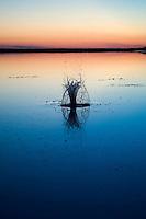 Il complesso produttivo delle saline è situato nel comune italiano di Margherita di Savoia (nome dato dagli abitanti in onore alla regina d'Italia che molto si adoperò nei confronti dei salinieri) nella provincia di Barletta-Andria-Trani in Puglia. Sono le più grandi d'Europa e le seconde nel mondo, in grado di produrre circa la metà del sale marino nazionale (500.000 di tonnellate annue).All'interno dei suoi bacini si sono insediate popolazioni di uccelli migratori e non, divenuti stanziali quali il fenicottero rosa, airone cenerino, garzetta, avocetta, cavaliere d'Italia, chiurlo, chiurlotello, fischione, volpoca..Nella foto gli schizzi provocati dal lancio di un sasso nelle acque di un bacino, nelle quali si riflette il rosso del tramonto.